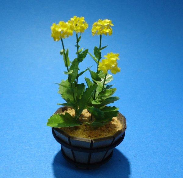 画像1: 菜の花〔G-44〕