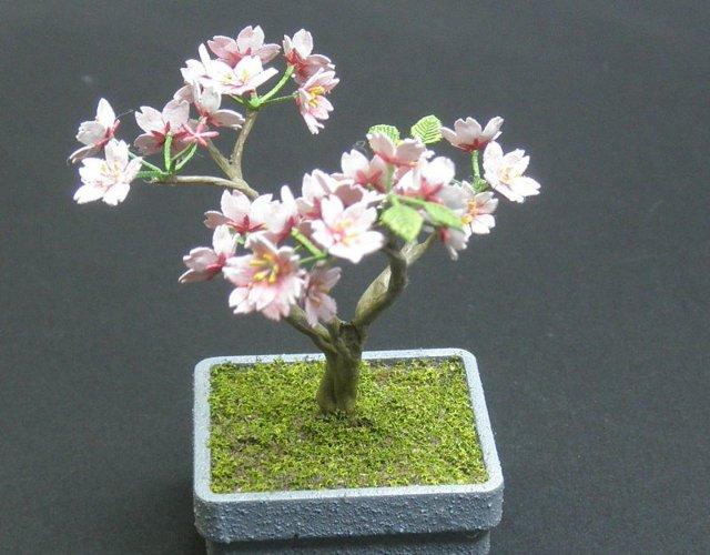 画像1: 盆栽さくら
