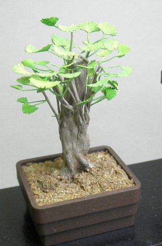 画像1: 盆栽いちょう